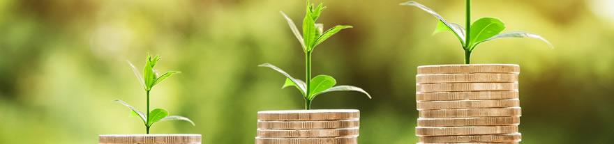 Münzen, aus denen eine Pflanze wächst